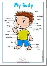 17 Best Body Images Body Preschool Human Body Unit All