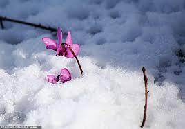 Image result for عکس از زمستان