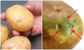 Vứt bỏ ngay những củ khoai tây có chứa dấu hiệu này nếu không muốn bệnh tật  đeo bám cả đời