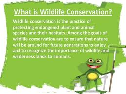 protect wild animals essay editing writing essays how to save animals by participating in n wildlife