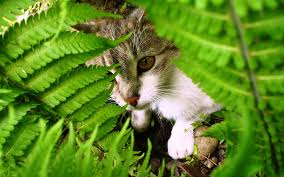 Wallpaper : cat, grass, plants, leaves 1920x1200 - - 1026519 - HD  Wallpapers - WallHere