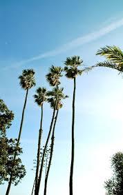palm trees tumblr. Skate Tumblr Summer Hipster Green Blue Nike Los Angeles Nature California Urban Palm Trees West Coast
