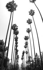 Creativity Palm Trees Tumblr Black And White Find This Pin More On Life By In Design Ideas