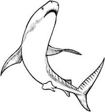 Small Picture Realistic Bull Shark Coloring page Day Care Pinterest Sharks