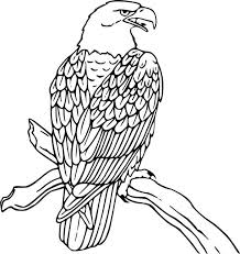 Small Picture Bald Eagle is Hungry Coloring Page NetArt