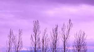 Purple Wallpaper Hd - Ryan Wallpaper