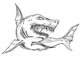 Collection Of Shark Outline Drawing Download More Than 30