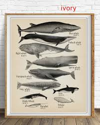 Whale Size Chart Whale Poster Beach House Art Whale Size Print Bathroom Decor Whale Print Whale Chart Bathroom Art Vi1475