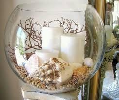 Bulk Nutmeg Shells Natural Seashells Florida Seashells Real Seashell Home Decor
