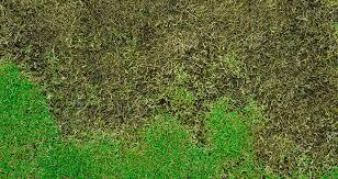 Brown Patch Disease Brown Patch Disease Blogs Barefoot Associates Nc Barefoot
