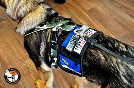 cape vest custom designed leather dog leash the leash of your dreams