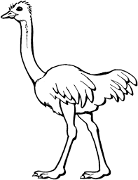 Small Picture Ostrich coloring page Free Printable Coloring Pages