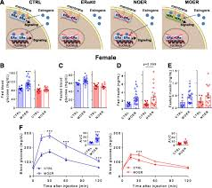 Loss Of Nuclear And Membrane Estrogen Receptor α Differentially