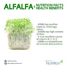 alfalfa nutrition facts
