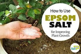 epsom salt gardening. Fine Gardening And Epsom Salt Gardening