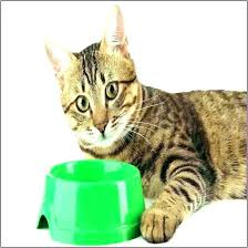best food for diabetic cat. Cat Food For Diabetic Cats Best Canned .