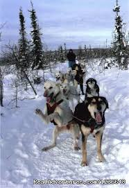 enthusiasm powers our team sled dog adventures