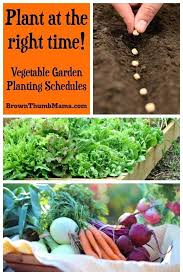 best time to plant a vegetable garden vegetable garden planting schedules best of planting vegetables vegetable