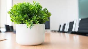 Office Design Ideas For Small Business Simple 48 Office Plants That Fit On Your Desk Small Business Trends