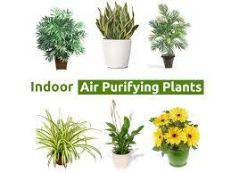 Top 10 Best Indoor Air Purifying Plants
