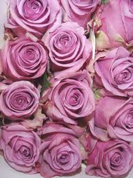 Roses Tumblr Aesthetic Tumblr Crystals ...