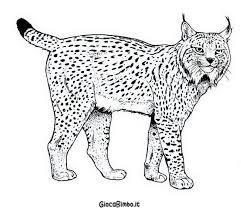 Disegni Di Tigre Da Colorare Giocabimbo