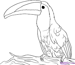 Small Picture Toucan Coloring Pages GetColoringPagescom