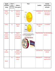 Final Organelle Chart Docx Organelle And Possible Analogy