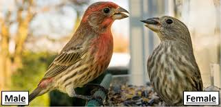 The 24 MOST Common Birds in Georgia! (2021) - Bird Watching HQ