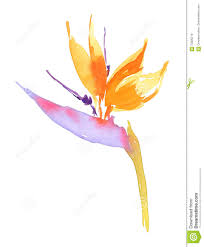 tropical flower bird of paradise ilration hand painted