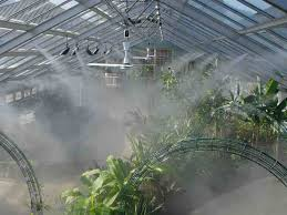 Tropical plants love high humidity.