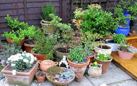 container gardening. Mixed Herbs Flowers Container Growing Gardening W