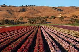 gilroy calif fruit farm