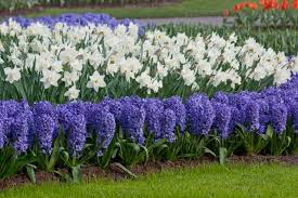 Small Picture Garden Design Garden Design with Buy Spring Bulbs Now But which