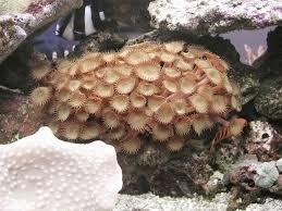 Pericoli in acquario zanclus.it