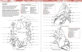 Anatomical Heart Coloring Pages 1917226 Anatomy Chronicles Network