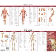 Anatomical Chart Companys Illustrated Pocket Anatomy The Muscular Skeletal Systems Study Guide