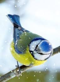Киевский снегирь, машины в снежном плену и радостные дети: столица Украины после сильного снегопада 1 марта - Цензор.НЕТ 3703