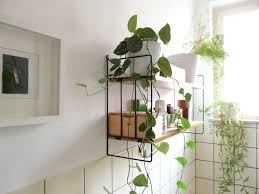 plants feng shui home layout plants. If You Want To Put Plants In Restroom, Select Those With Strong Survival Abilities Such Feng Shui Home Layout N