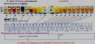 mÉmoire de magister thÉme pdf free