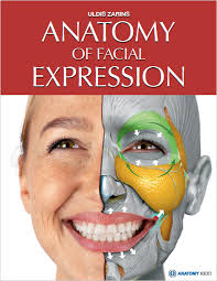 face anatomy anatomy next store anatomy of facial expression