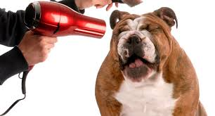 ireland s favourite cat and dog grooming insurance