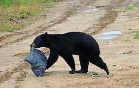Image result for bears on a dump