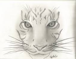 Sketched Animals Magdalene Project Org