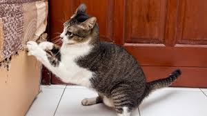 4 Ways to Curb Cat Scratching