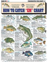 Bass Species Chart How To Identify Freshwater Species Shad Perch Walleye