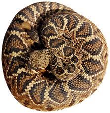 Rattlesnake Pattern