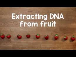Extracting DNA from <b>fruit</b> - YouTube