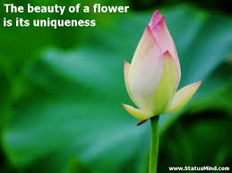 The Beauty Of Flowers Quotes Best of The Beauty Of A Flower Is Its Uniqueness StatusMind