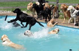 chien chats marrants piscine Images?q=tbn:ANd9GcQe65Y0AW5fQLEK_3IWu5LN2aHZFGQdWnGf9sja-WZ0TU8scttl